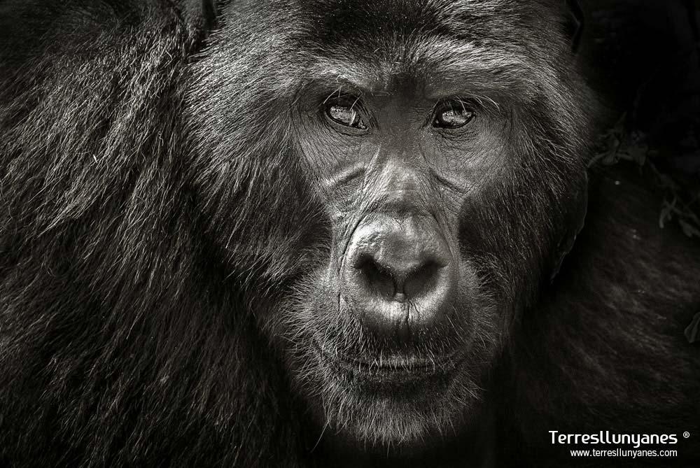 Viajes-uganda-gorilas-05