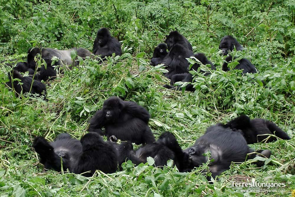 Viajes-uganda-gorilas-59