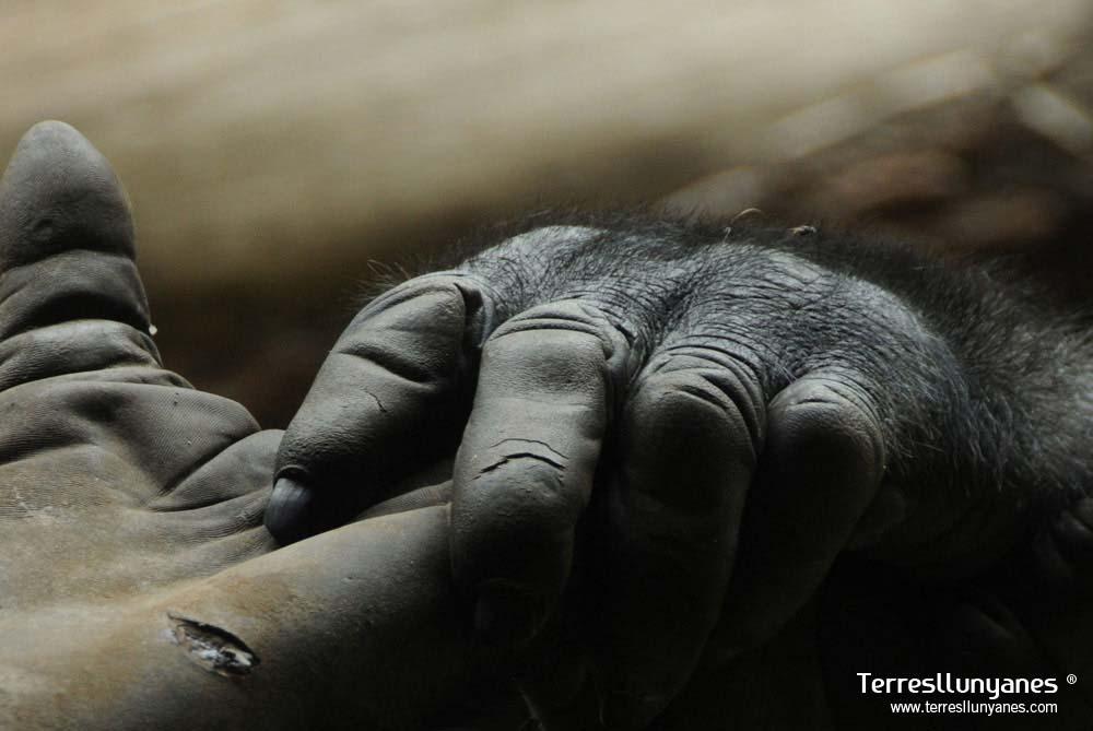 Viajes-uganda-gorilas-60