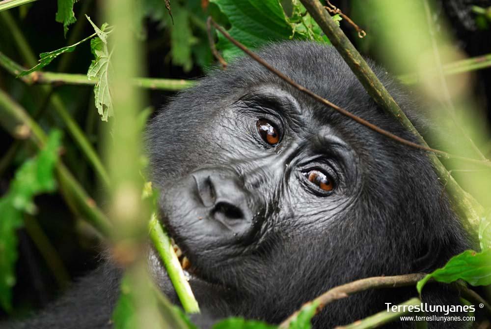 Viajes-uganda-gorilas-61