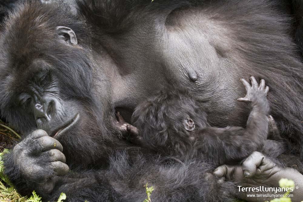 Viajes-uganda-gorilas-69