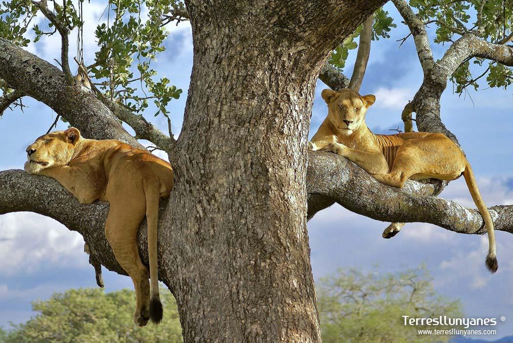 Viajes Uganda. Ishasha. Terres Llunyanes