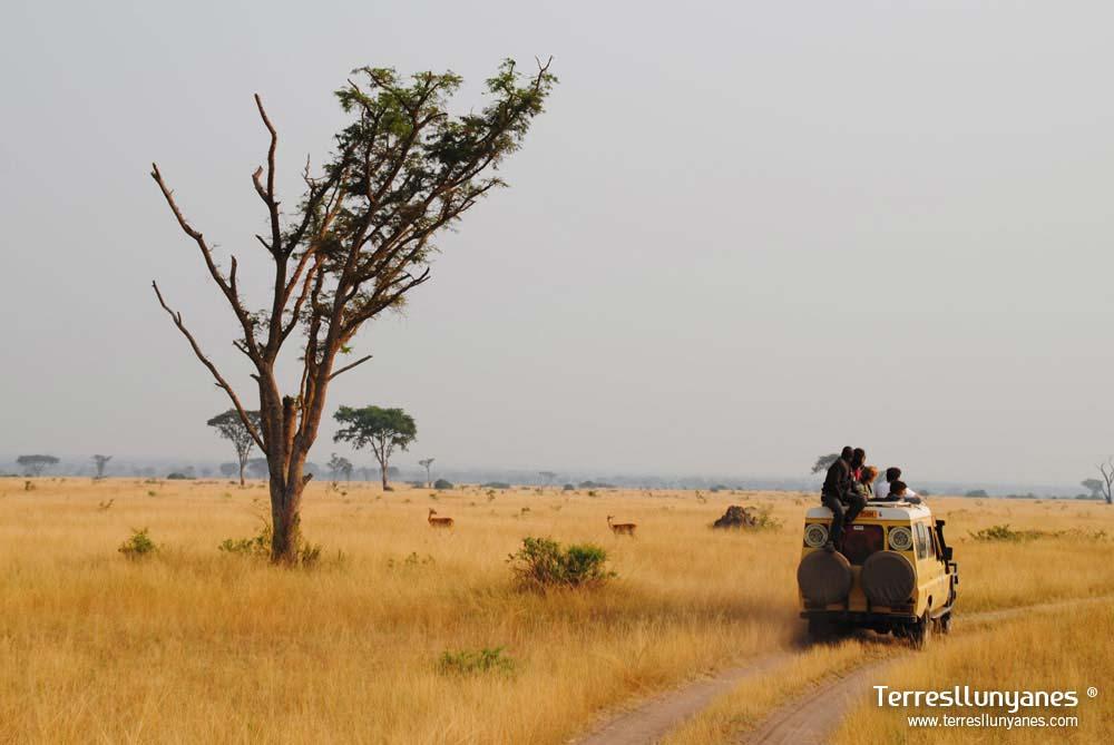Viajes-uganda-ishasha-12