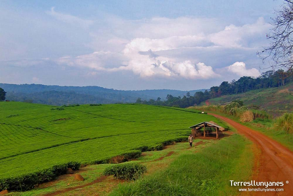 Viajes-uganda-kibale-14
