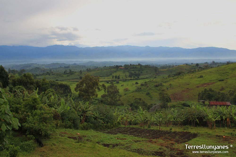 Viajes-uganda-kibale-47