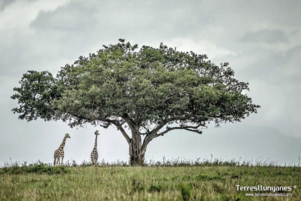 Viajes-uganda-murchison-01