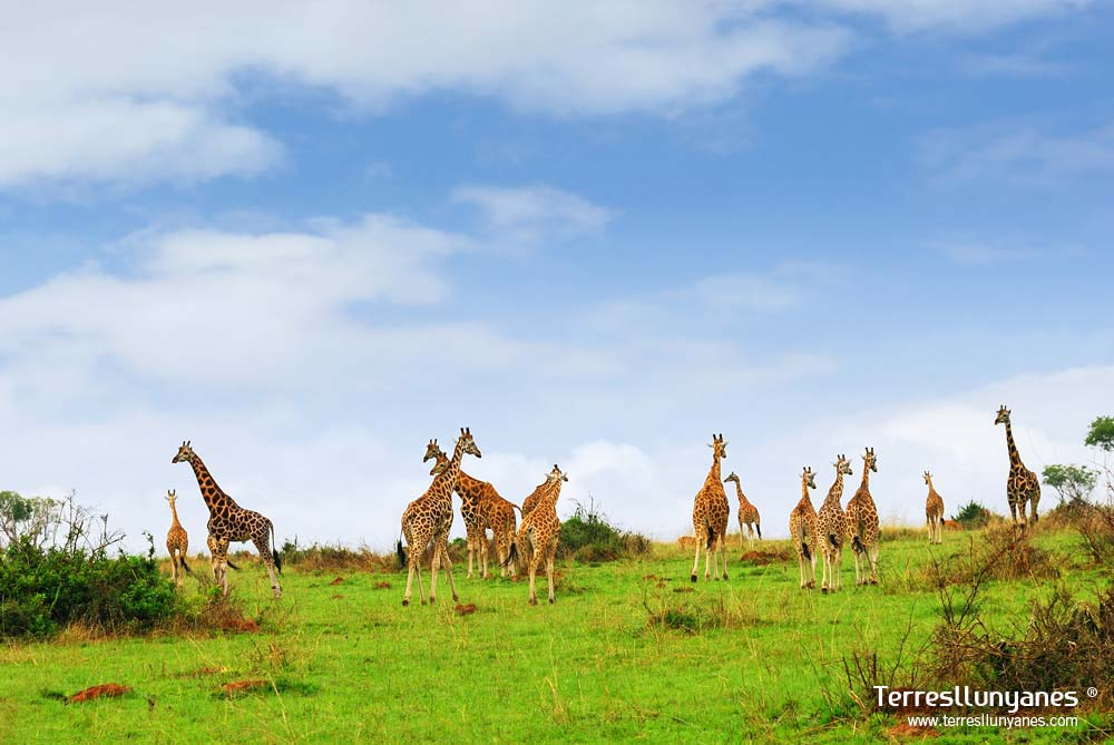 Viajes-uganda-murchison-66