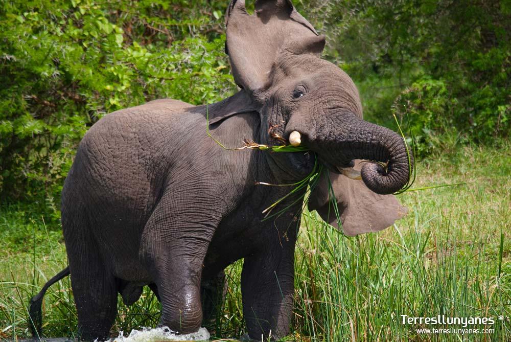 Viajes-uganda-murchison-71